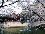 Весенняя Ярмарка корейского туризма